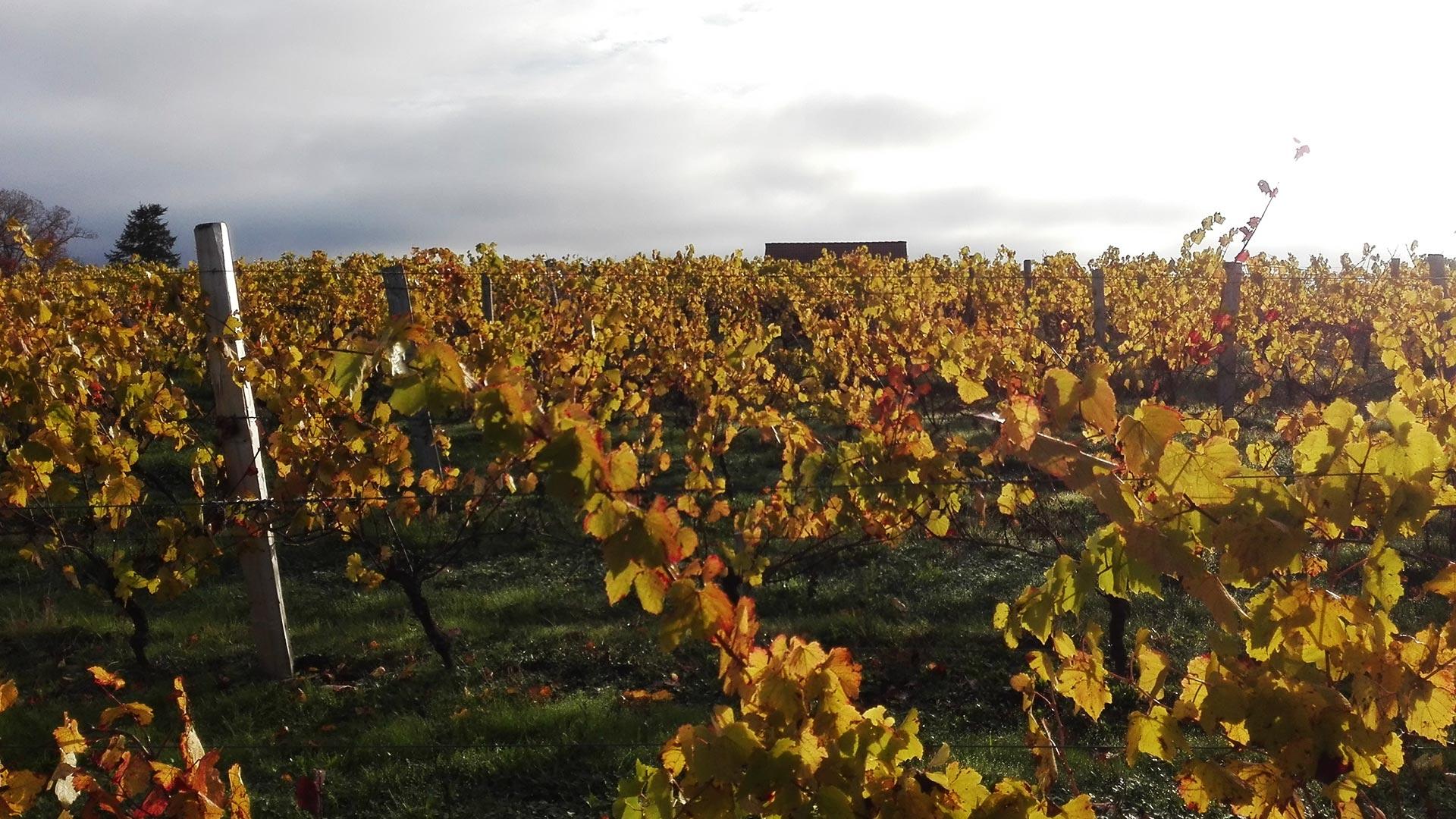 domaine-des-gabies-slide-accueil-vignes-automne