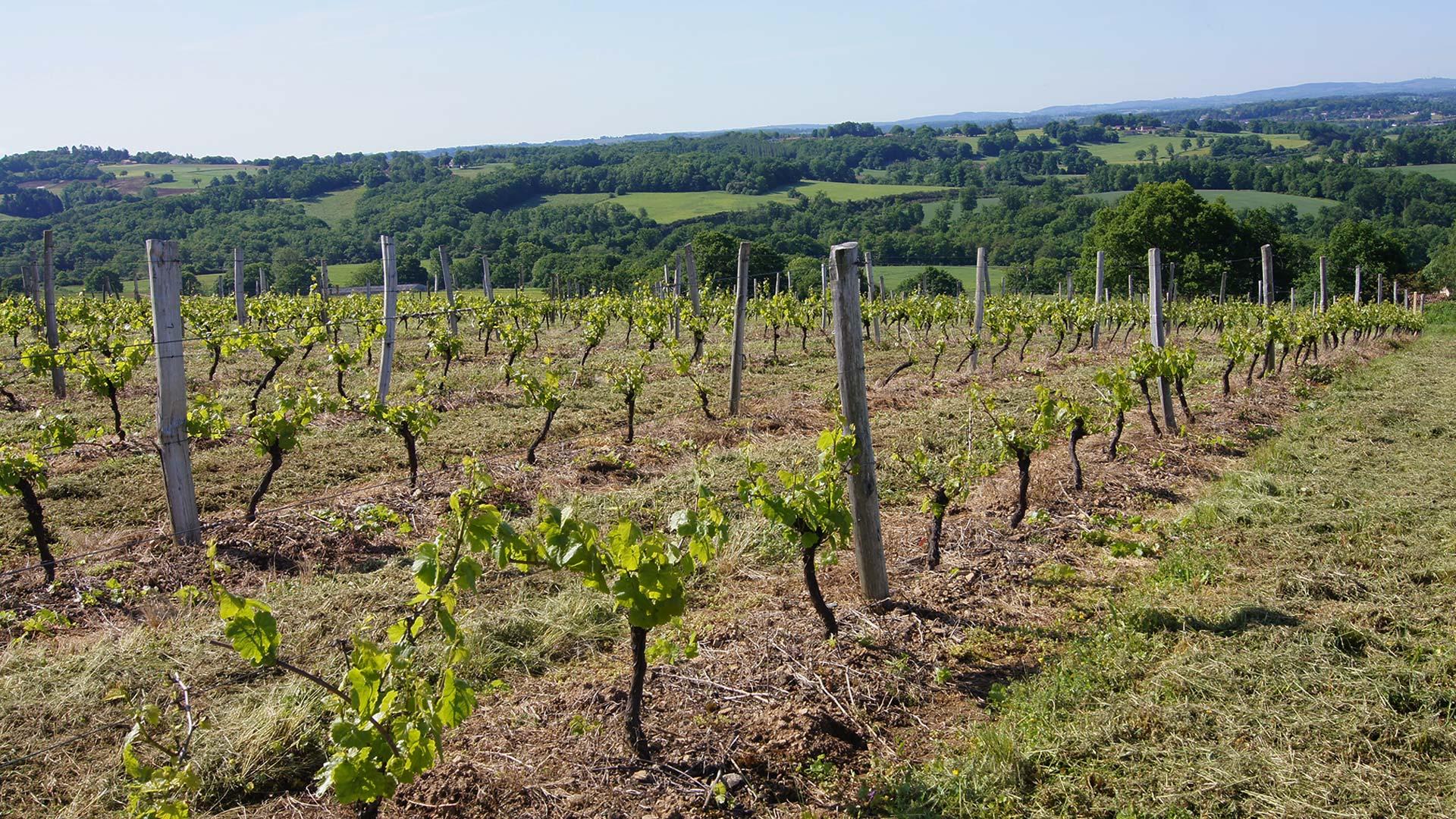 domaine-des-gabies-slide-accueil-vignes-beau-temps
